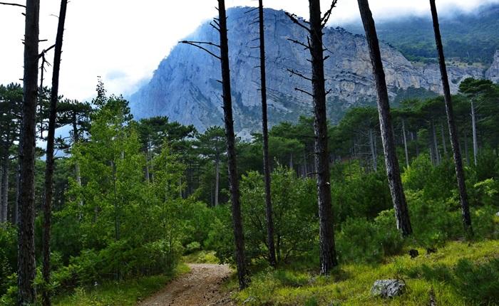 Ялтинский природный заповедник