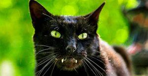 саблезубый кот