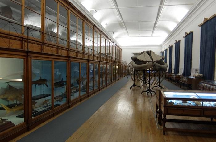 Научный музей Коимбры