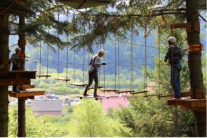 Веревочный парк «TREE TO TREE»