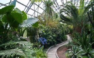 Полярно-альпийский ботанический сад имени Аврорина