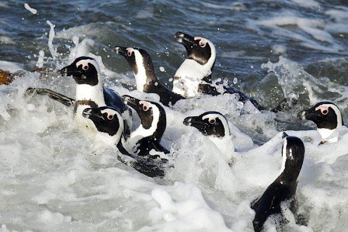 Водный зоопарк