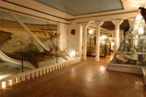 Историко-краеведческий музей имени Самсонова