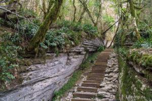 Тисо-самшитовая роща и каньон Чёртовы ворота