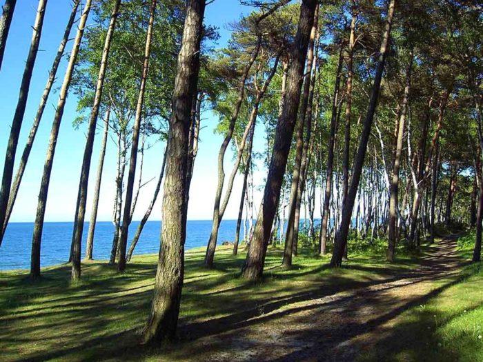 Парк «Сосновый бор»
