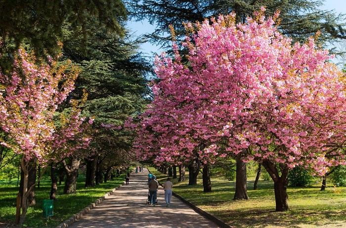 Ботанический сад им. Багрова