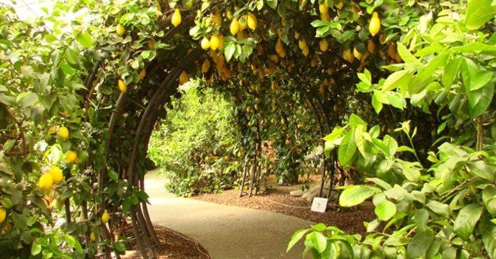 Уфимский лимонарий