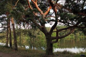Памятник природы Лохин остров