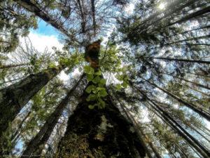 Цаговский лес