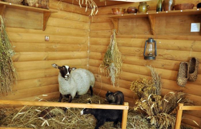 Музей романовской овцы