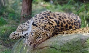 Национальный парк «Земля леопарда»