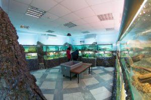 Музей-аквариум «Рыбы Амура»